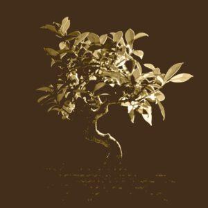 """Album cover artwork for Slowtide - """"Origins"""""""